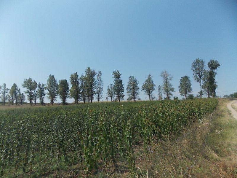 DSCN2627 fabrica de copaci, o afacere roditoare Fabrica de copaci, o afacere roditoare DSCN2627 1 800x600